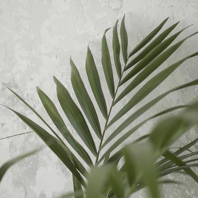 Natural inspiration. Return to simplicity.   💚  Inspiración natural. Volver a la simplicidad.   #inspiration #naturalhomes #naturalness #origin #bcnstore #dareels #dareelsdesign